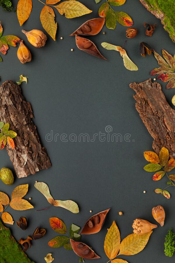 Autumnal-winter composition with dried leaves, bark of trees and  berries on dark background. Frame of plants. Flat lay, copy. Space royalty free stock images