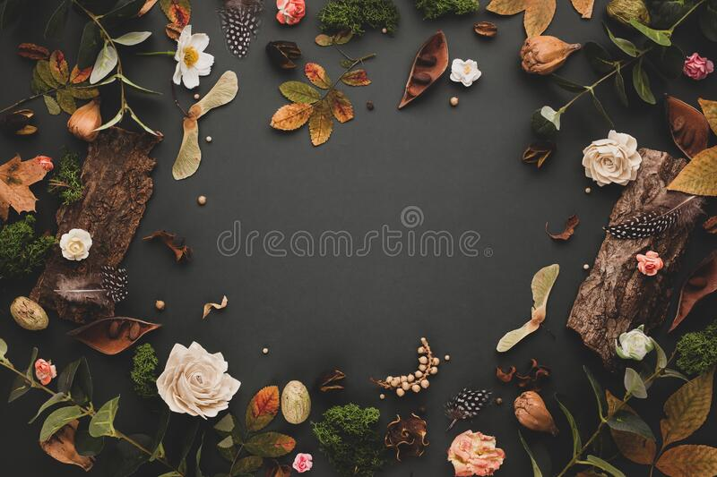 Autumnal-winter concept with dried flowers and leaves, branches of eucalyptus, bark of trees and  berries on dark background. Frame of plants. Flat lay, copy royalty free stock photo