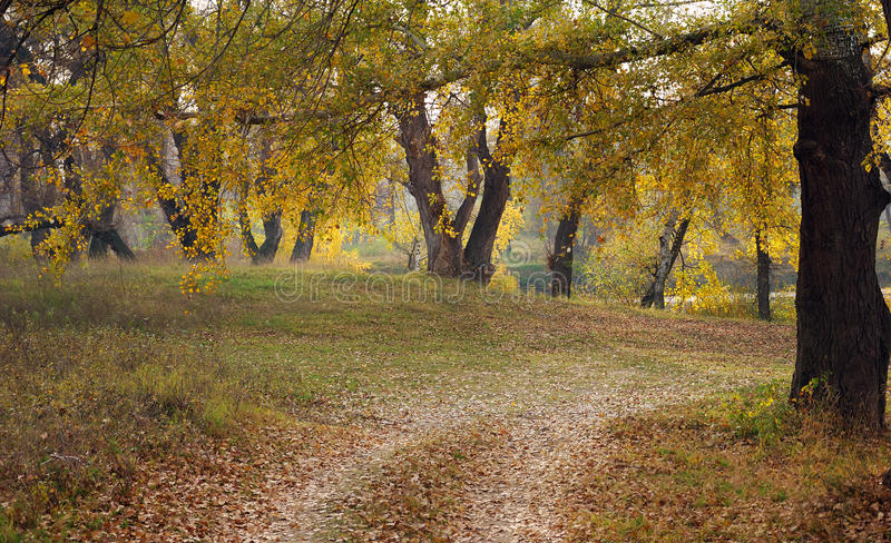Autumnal Wood Royalty Free Stock Photos