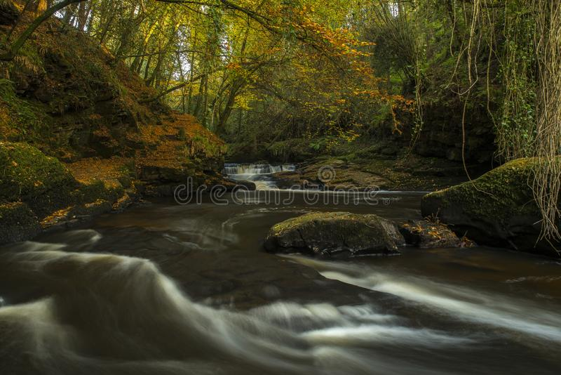 Autumnal woodland scene, shaded river rapids, mossy rocks covered with autumn leaves, and trees in their yellows and browns. Bathe royalty free stock image