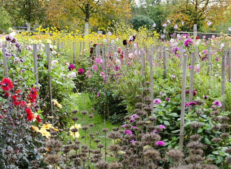 Autumnally trädgård fotografering för bildbyråer