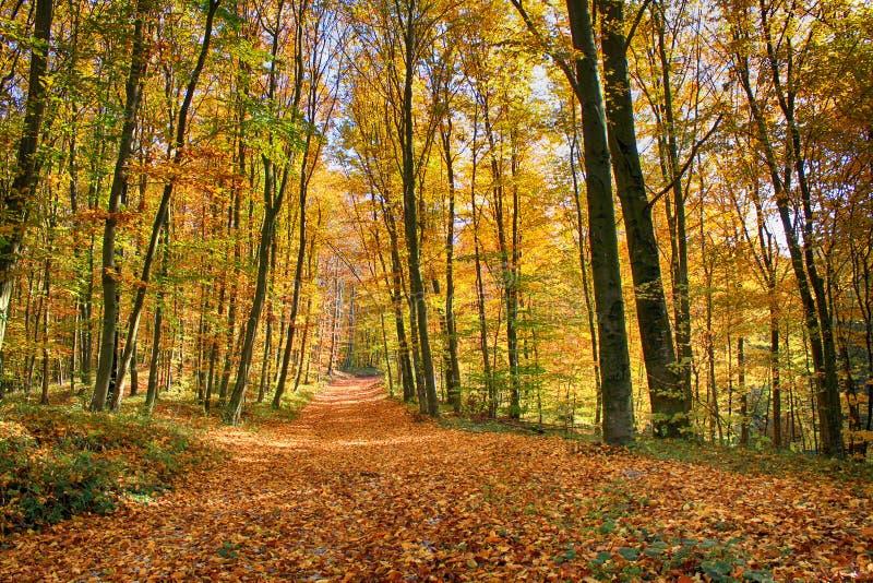 Autumnin el bosque fotografía de archivo
