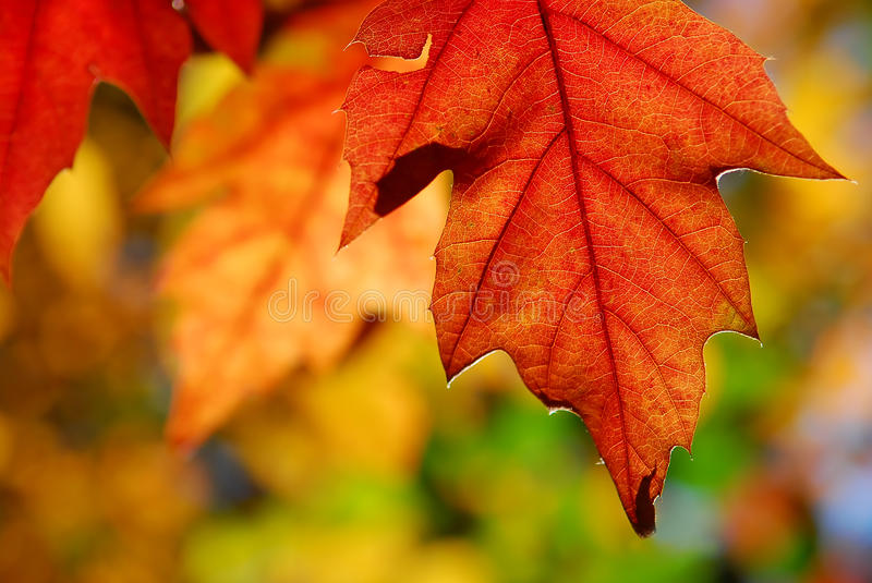 Autumnleaves image stock