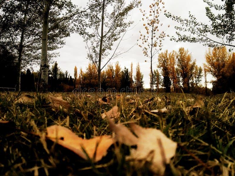 Autumnnnn fotografia stock libera da diritti