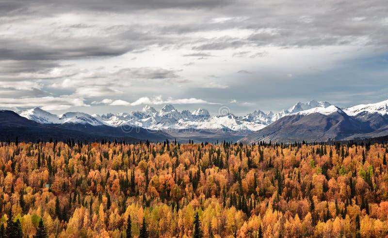 Autumns beginning in Alaska royalty free stock photography