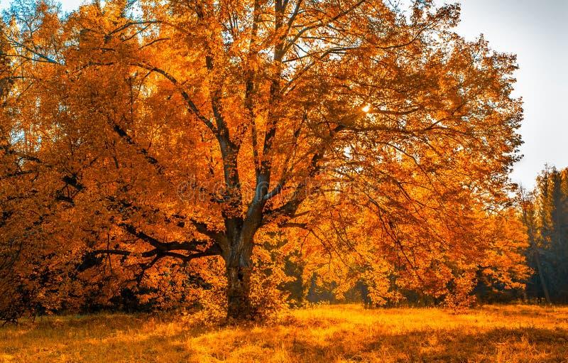 Autunm-Baum im Park, vervollkommnen Falllandschaft lizenzfreies stockfoto