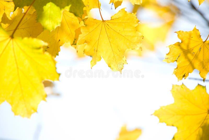 autunno immagine stock
