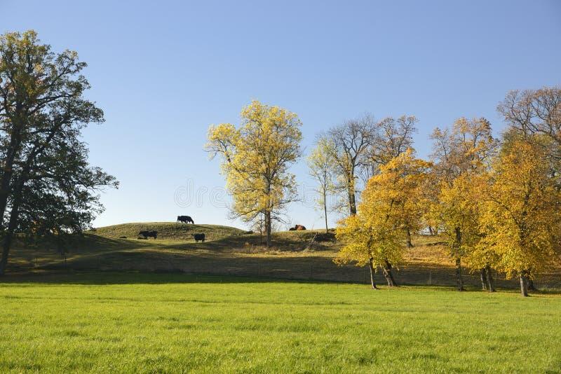 Autunno al cortile ed al giardino Fondo della natura con gli alberi variopinti al giorno soleggiato fotografia stock