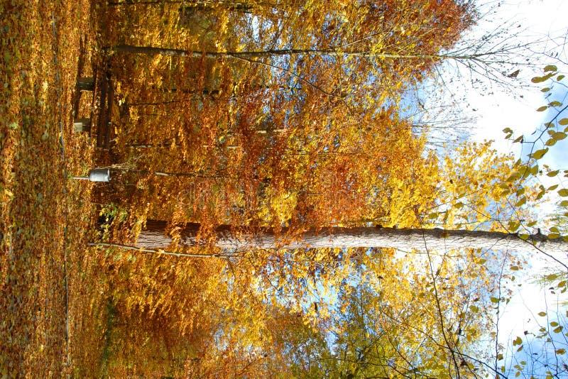 Download Autunno in Baviera fotografia stock. Immagine di nave - 3894424