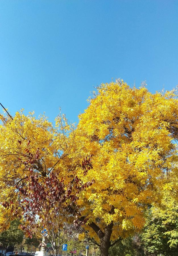Autunno a Bucarest immagine stock