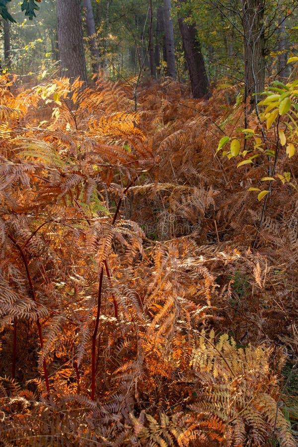 Autunno, che cosa un tempo di coloritura nelle stagioni immagini stock libere da diritti