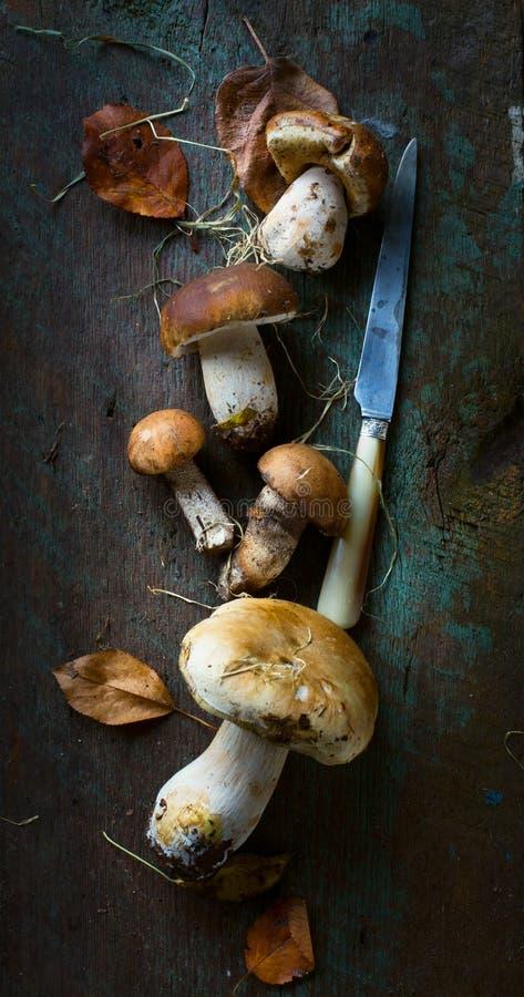 Autunno che cucina fondo; porcini organico MU della foresta del condimento fotografia stock libera da diritti