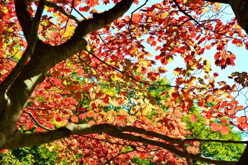 Autunno Colourful immagini stock libere da diritti