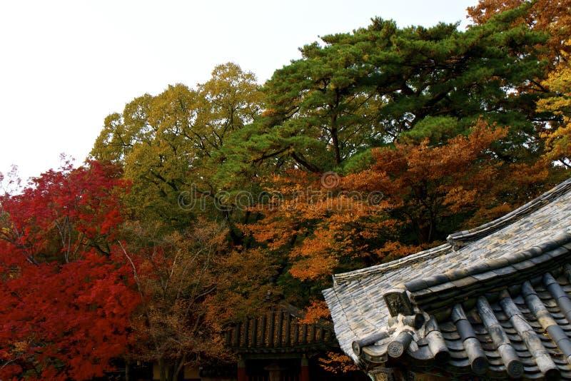 Autunno in Corea del Sud fotografie stock
