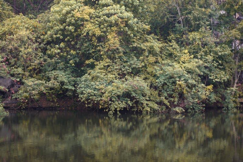 Autunno dell'albero in foresta riflettere acqua prima del tramonto per la carta da parati fotografia stock