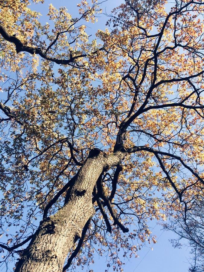 Autunno dorato al parco fotografia stock libera da diritti