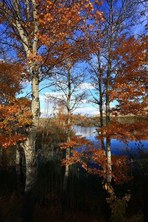 Autunno dorato del lago bianco sand fotografia stock libera da diritti