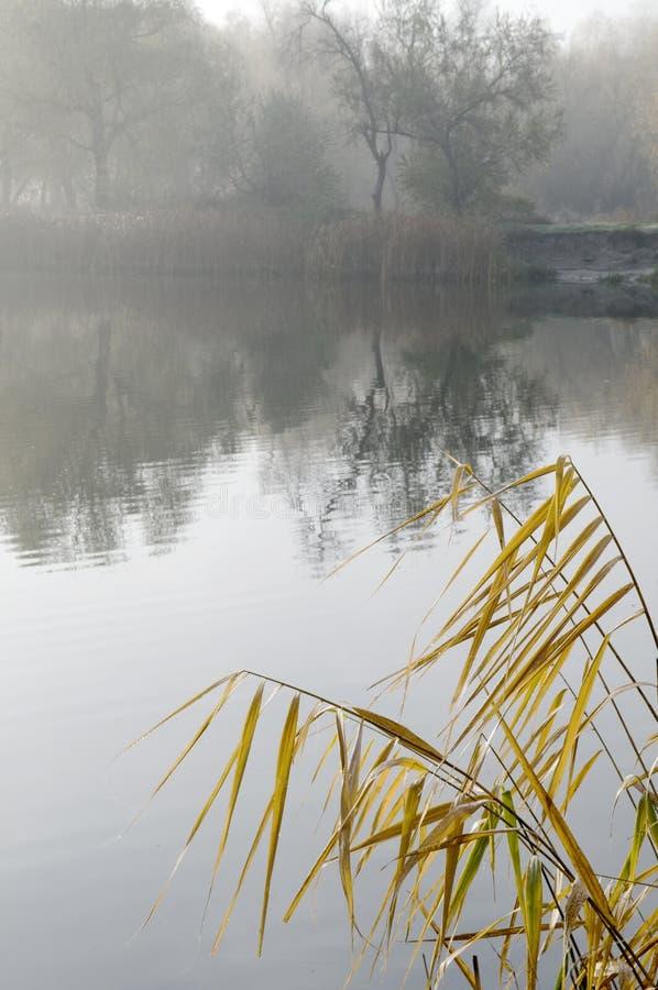 Autunno, fiume immagine stock