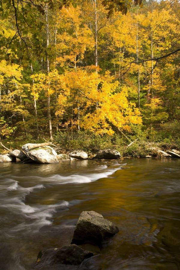Autunno, fiume di Tellico, N-F cherokee fotografia stock libera da diritti