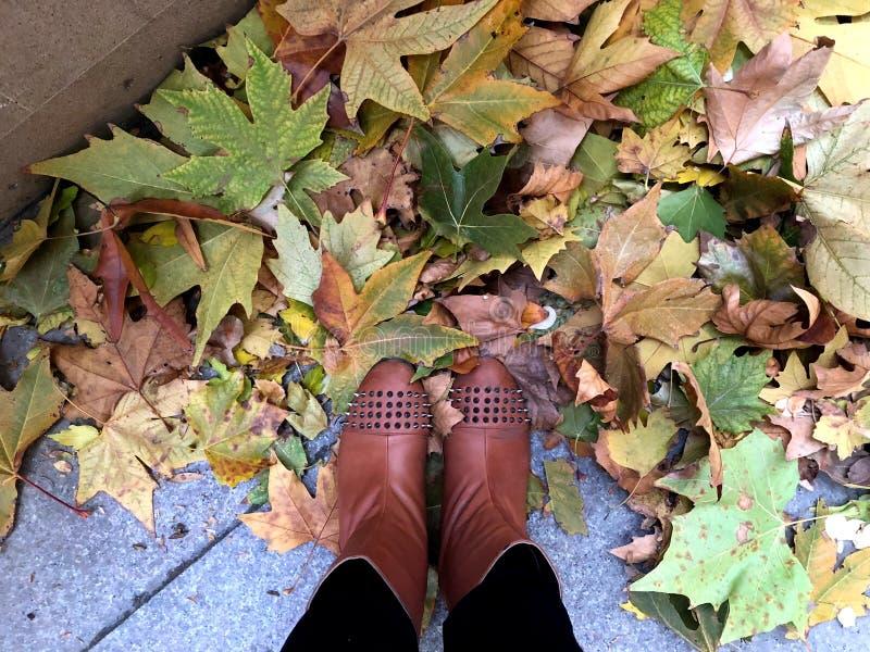 Autunno Foglie giallo verde sulla pavimentazione e sulle gambe delle donne fotografie stock libere da diritti