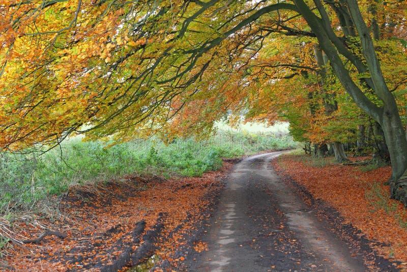 Autunno giù un vicolo frondoso inglese fotografia stock