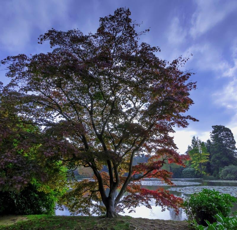 Autunno inglese con il lago e gli alberi - Uckfield, Sussex orientale, Regno Unito fotografia stock
