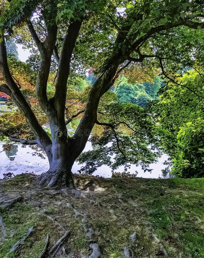 Autunno inglese con il lago, gli alberi ed il sole visibile rays - Uckfield, Sussex orientale, Regno Unito immagine stock