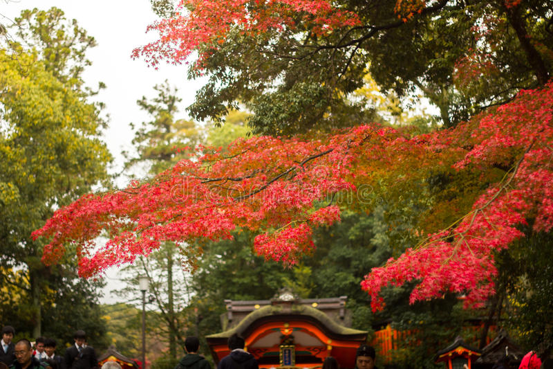 Autunno a Kyoto, Giappone fotografia stock libera da diritti