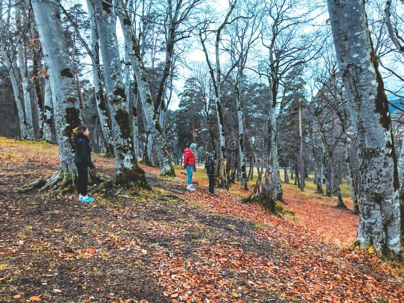 Autunno nei bambini della foresta delle montagne che camminano nel legno Foresta con gli alberi nudi, foglie di autunno arancio c fotografia stock libera da diritti