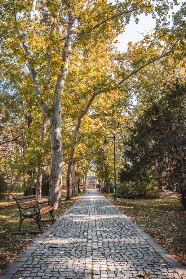 Autunno nel parco della città, in bei alberi dorati, in un banco di legno ed in un percorso fotografie stock