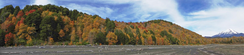 Autunno nel parco nazionale di Conguillio, Cile immagine stock libera da diritti