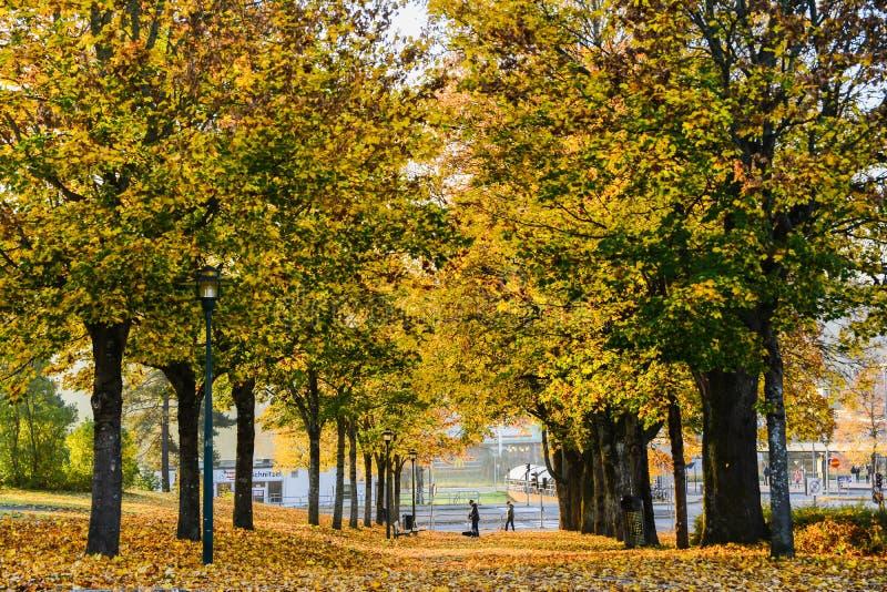 Autunno nel parco pubblico in Svezia che cammina per lavorare immagine stock