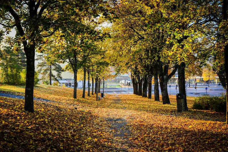 Autunno nel parco pubblico in Svezia che cammina per lavorare fotografie stock