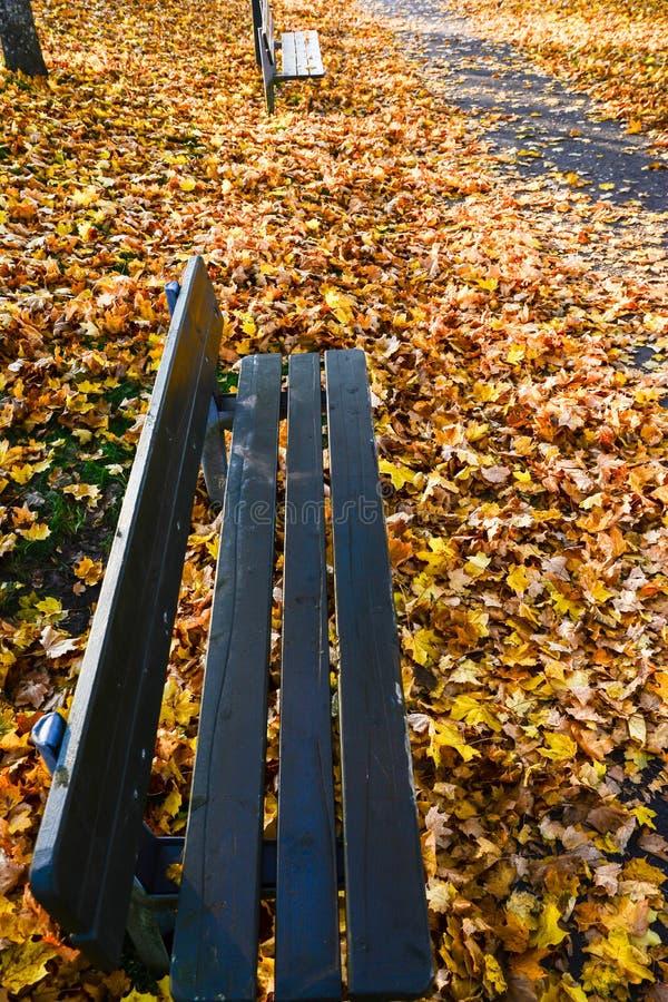 Autunno nel parco pubblico in Svezia che cammina per lavorare immagini stock