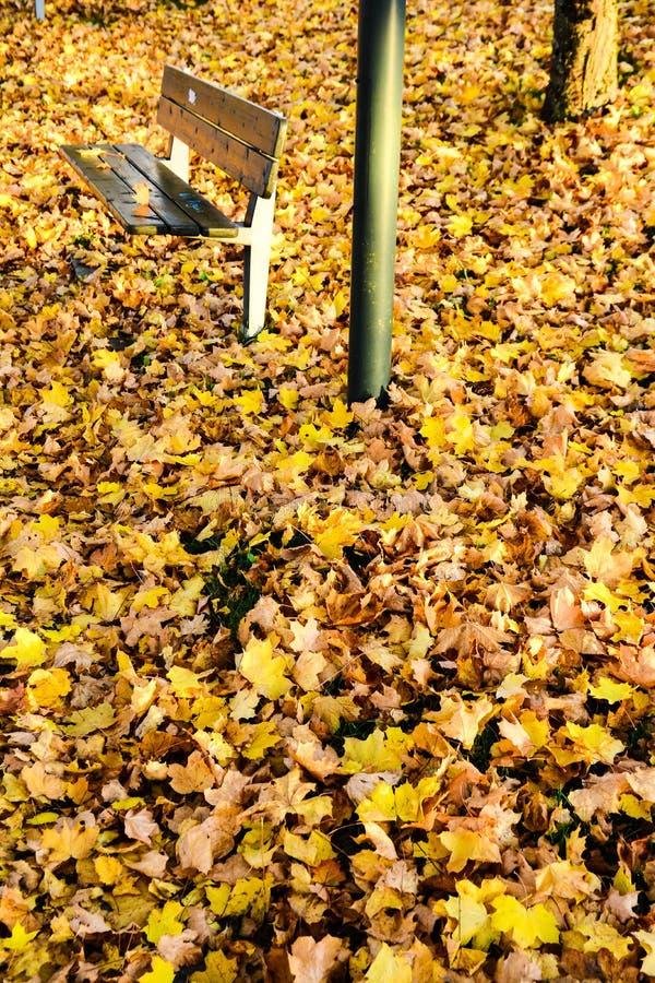 Autunno nel parco pubblico in Svezia che cammina per lavorare fotografia stock