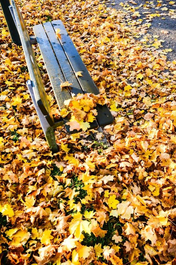 Autunno nel parco pubblico in Svezia che cammina per lavorare fotografie stock libere da diritti