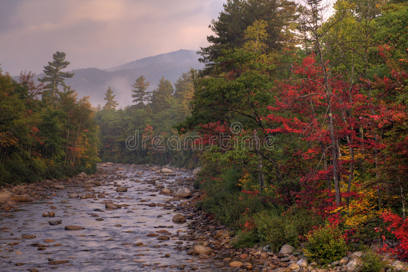 Download Autunno nella foresta fotografia stock. Immagine di bianco - 3886170