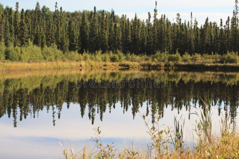 Autunno nella foresta boreale fotografia stock
