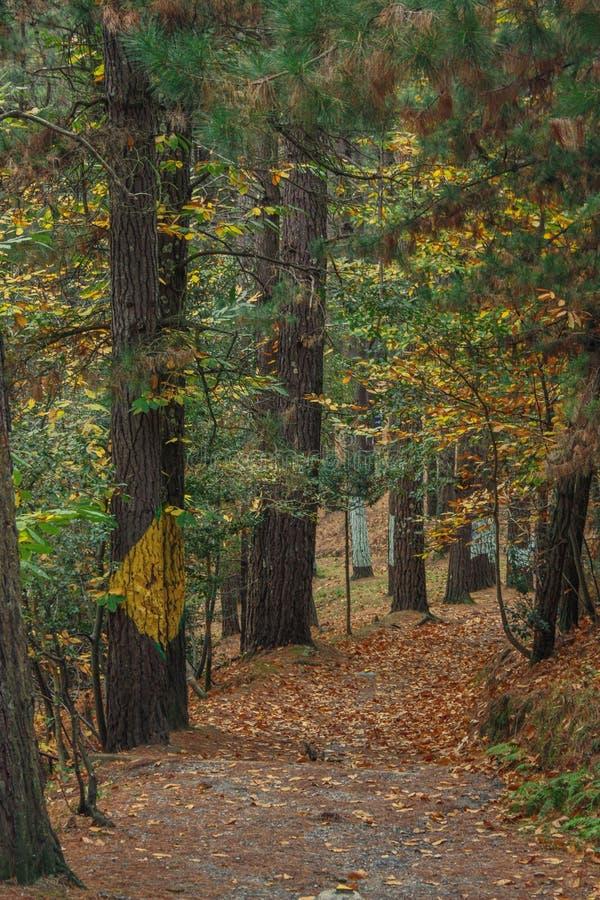 Autunno nella foresta di Oma fotografie stock libere da diritti