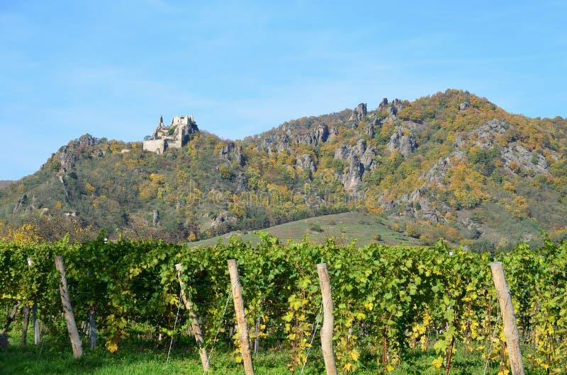 Autunno nella vigna, Niederösterreich immagini stock