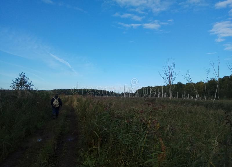 Autunno Paesaggio della foresta Cielo blu ed alberi con le foglie gialle e nessun foglie orizzonte sfondo naturale della Russia immagini stock