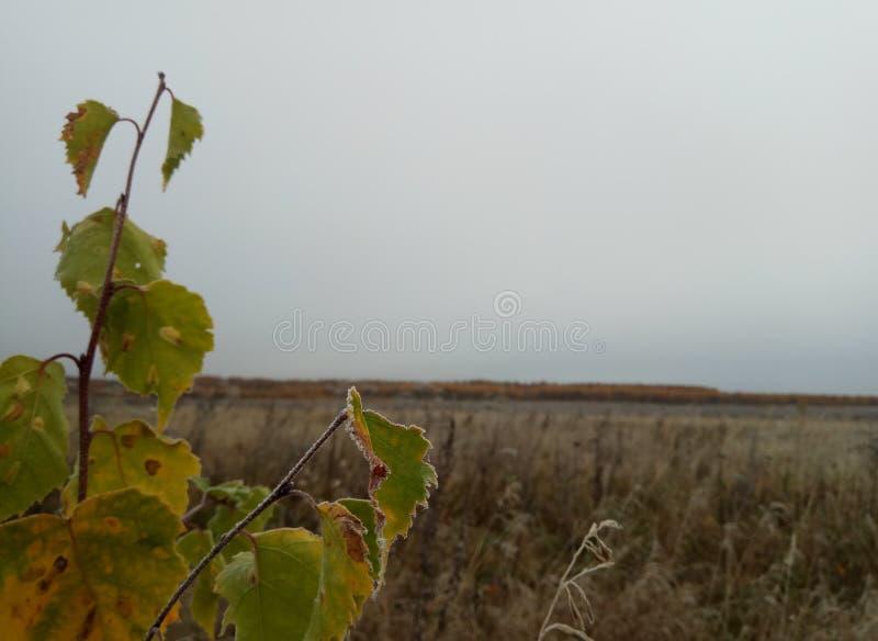 Autunno Paesaggio della foresta cielo ed alberi grigi con le foglie gialle e nessun foglie orizzonte sfondo naturale della Russia immagine stock