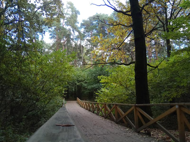 Autunno Paesaggio della foresta cielo ed alberi grigi con le foglie gialle e nessun foglie orizzonte sfondo naturale della Russia fotografie stock
