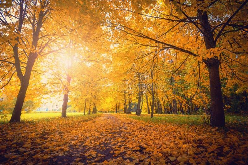 Autunno Parco con gli alberi gialli Fondo scenico di caduta immagini stock