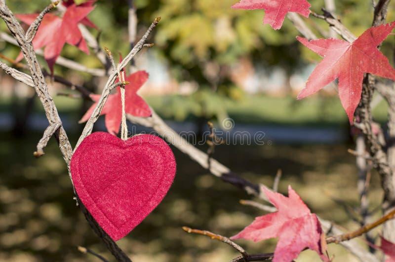 Autunno rosso fra le foglie di autunno rosse sull'albero fotografia stock