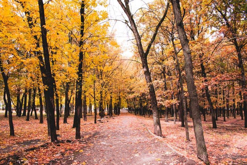 Autunno russo del parco immagini stock libere da diritti