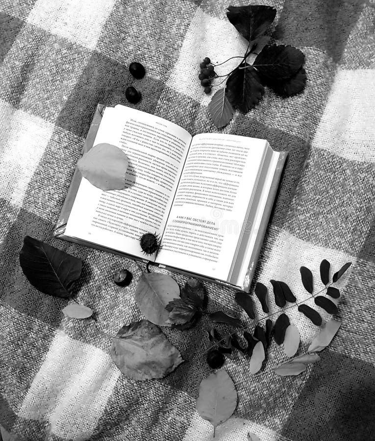 Autunno Scena della natura di caduta Bella sosta d'autunno fotografia stock