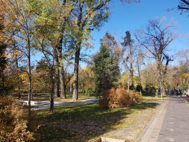 Autunno Scena della natura di caduta Bella sosta d'autunno fotografie stock libere da diritti