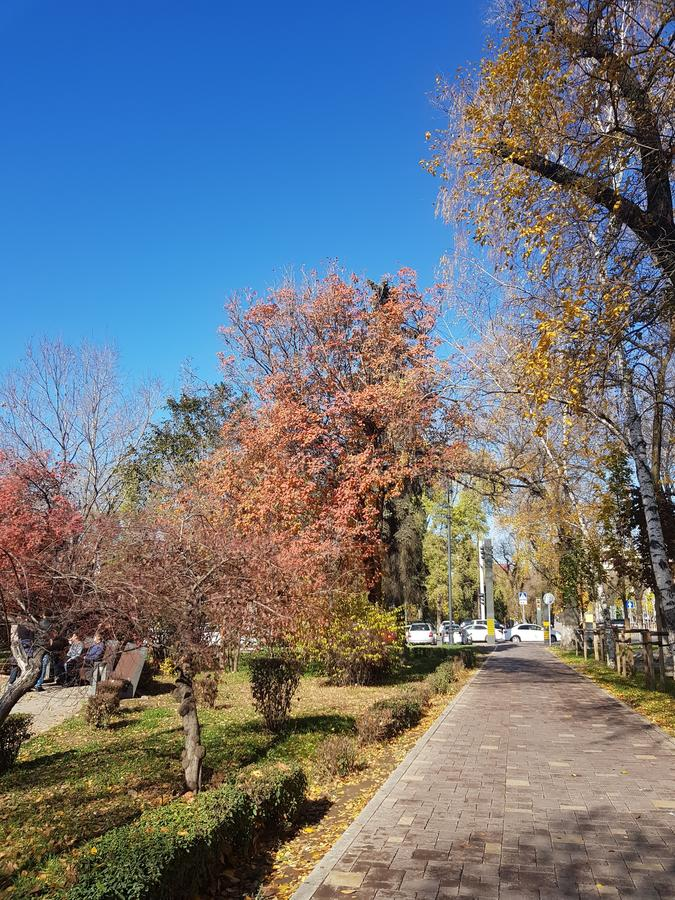 Autunno Scena della natura di caduta Bella sosta d'autunno immagine stock libera da diritti
