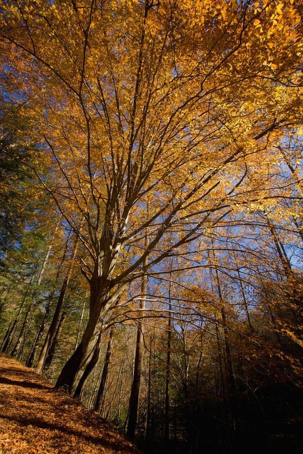 Autunno, sentiero forestale nazionale, TN immagini stock libere da diritti